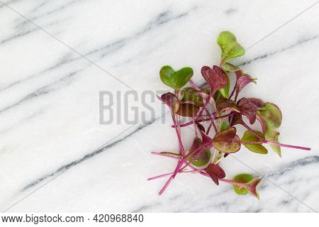 Close-up Of Radish Microgreens - Green Leaves And Purple Stems. Sprouting Microgreens. The Concept O
