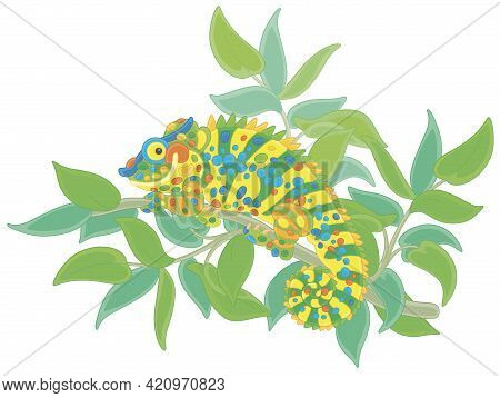 Funny Multi Colored Chameleon, Exotic Lizard With Protruding Eyes And A Prehensile Tail, Hiding Amon