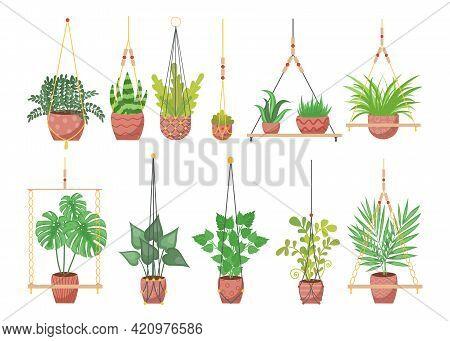 Set Of Handmade Plant Hangers. Cartoon Vector Illustration. Home Decorations, Plants In Pots Hanging