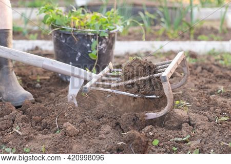 A Farmer In Rubber Overshoes Digs Up The Ground With A Ripper Shovel. Miracle Shovel For Loosening T