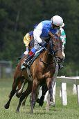 horse and jockey poster