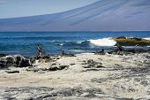 Nesting birds on a Galapagos Island beach poster
