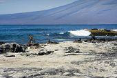 Nesting birds on a Galapagos Island beach poster