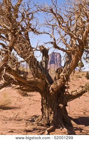 Tree Monument Valley
