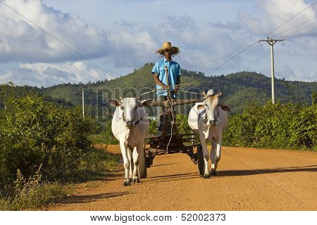 Cambodian Oxcart