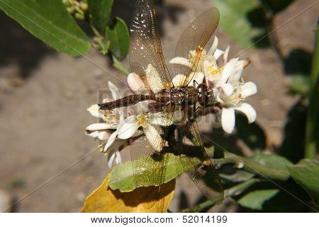 Dragonfly in a Garden
