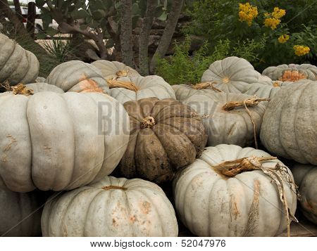 Pile Of White Pumpkins