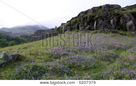 Bluebell Flowers In The Lake District