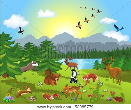 wild animals in the meadow