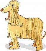 Vector illustration of purebred afghan hound dog poster
