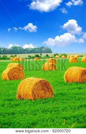 Agricultural landscape of hay bales in a green field