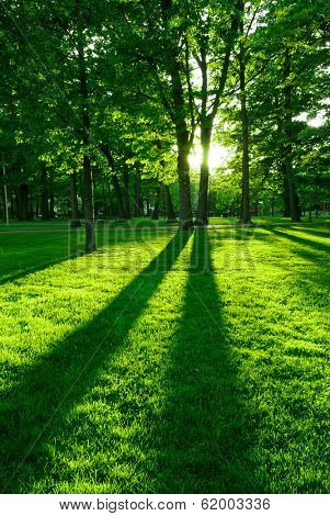Green park with long shadows from setting sun