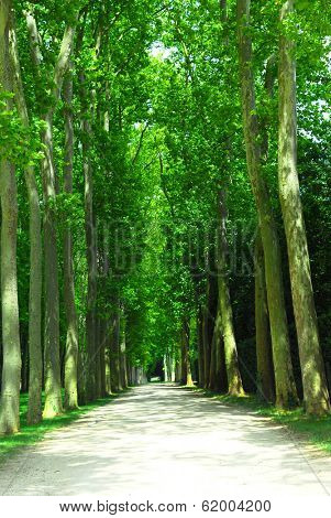Road surrounded by old green trees in Versailles gardens, France.