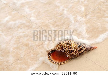 Seashell and ocean wave on sandy tropical beach