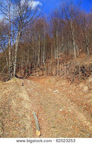 Forest At Lubochnianska Valley, Slovakia