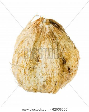 Coconut with spathe isolated on white background poster