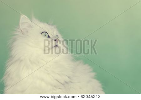 Cute White Persian Cat With Green Eyes Against A Green Background