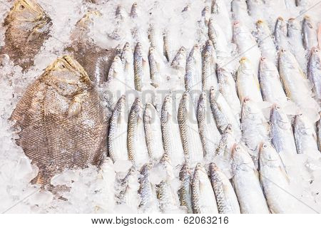Fresh Fish On Ice  Inthe Market