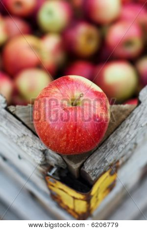 juicy Empire apple