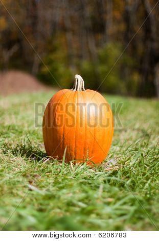 Lonely Pumpkin