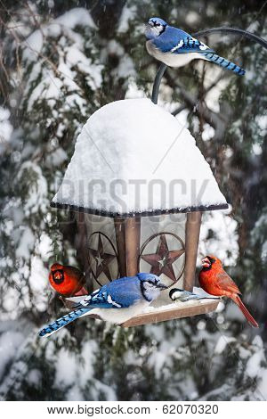 Bird feeder in winter with blue jays and cardinals