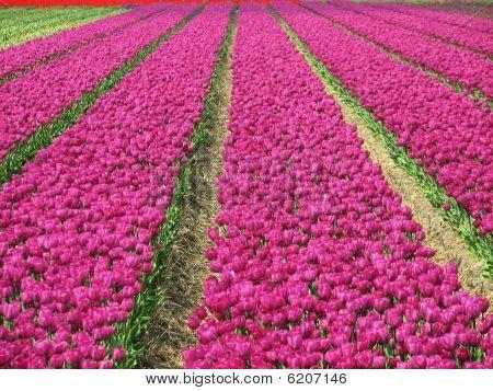 Frühling im holland