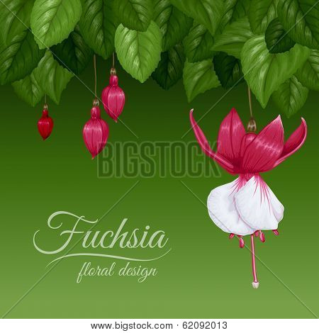 Background with leaves and beautiful flowers fuchsia. Vector illustration.