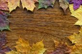 autumn maple leaves on the textured wooden background poster
