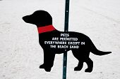 sign for pets at beach poster