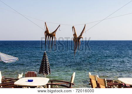Drying Octopus On Sun. Samos Island, Greece.