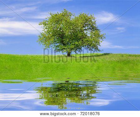 Field,tree and blue sky