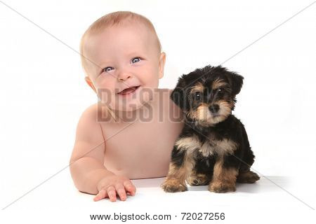 Cute Baby Boy With His Pet Teacup Yorkie Puppy