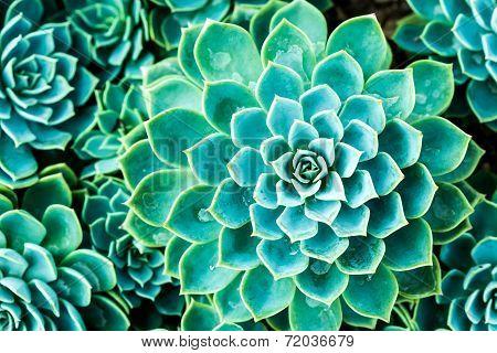 Cactus In Queen Sirikit Botanic Garden,chiangmai Thailand