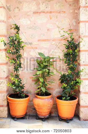 Flowerpots with green palnts and ancient wall