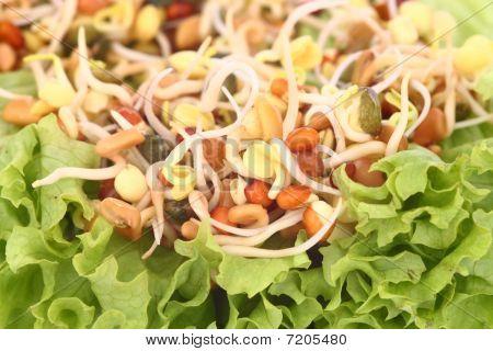 Scions And Salad