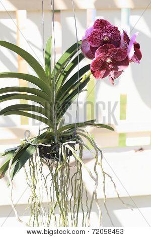 Purple Orchid Flowers In Garden