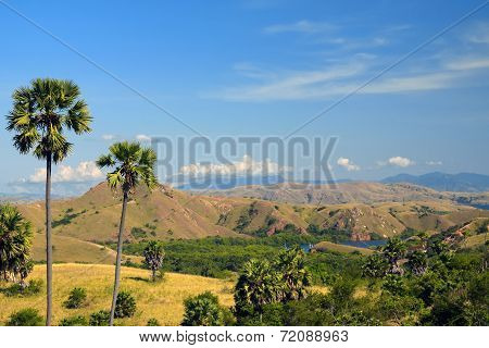 Close-up Of Palm Trees And Hills Covered By Grass And Bushes On The Background On A Bright Hot Summe