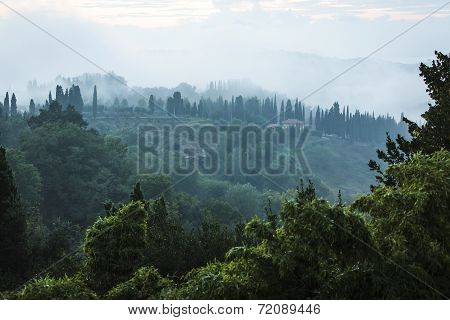 Green and foggy hillside in San Miniato Italy