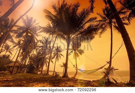 Tropical Paradise: Sunset At The Seaside - Dark Silhouettes Of Palm Trees And Amazing Cloudy Sky