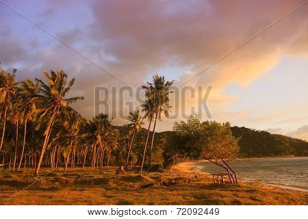 Palm Trees At The Seaside Under Pink Sunset Light