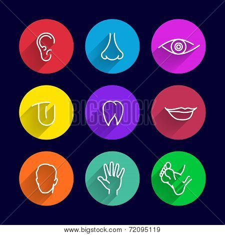 icons set of human bodies, body parts ear nose eyes lips teeth tongue head arm leg poster