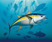 Shoal of yellowfin tuna in deep water. Raster illustration. poster