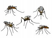 Set of black biting mosquitoes isolated on white poster