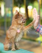 High five between the man and his dog poster