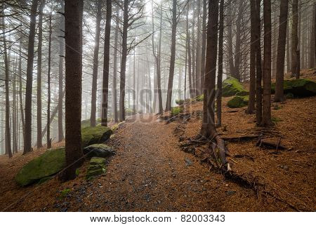 Appalachian Trail North Carolina Outdoors Forest Hiking Roan Mountain Nc