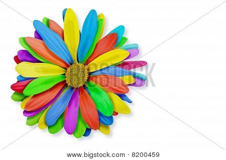 Colorful Rainbow Flower