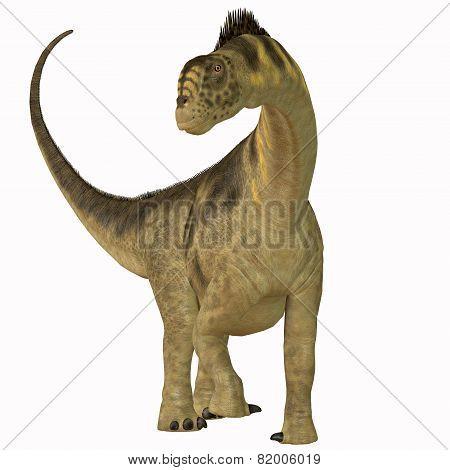 Camarasaurus On White