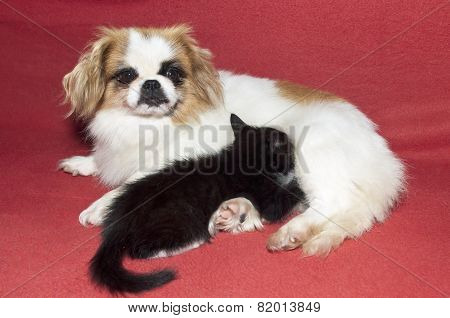 Small Kitten And Dog