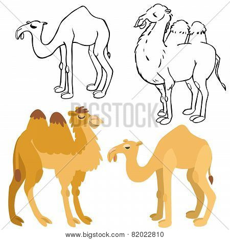 Cartoon Camels Set