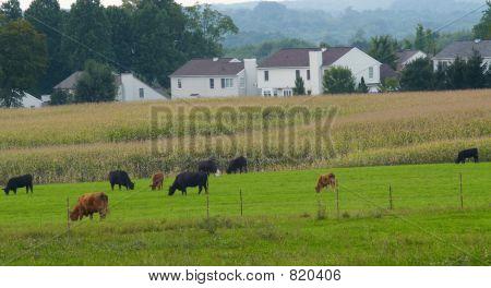 """Last farm in the county"""